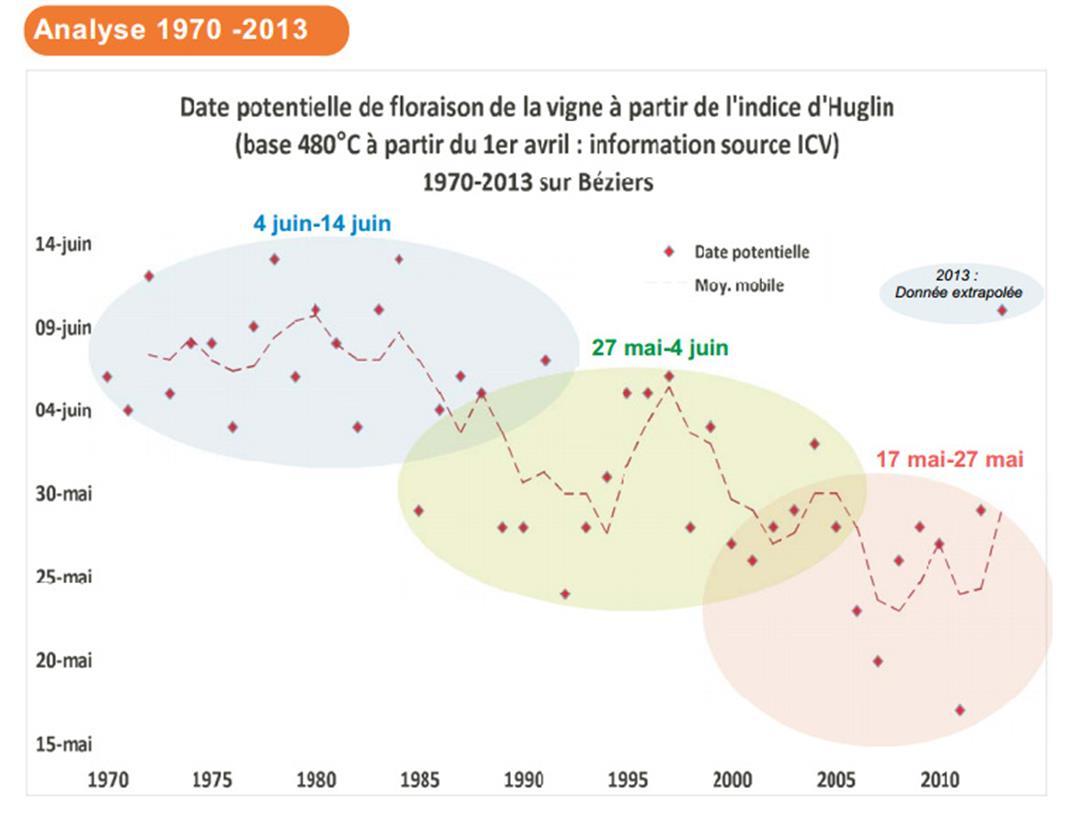 Les dates de floraison de la vigne évoluent de 1970 à 2013