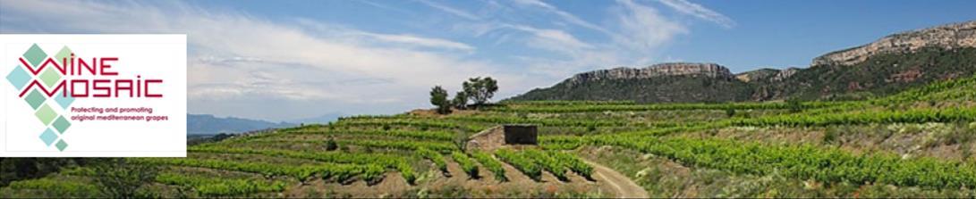 Wine Mosaic pour la sauveagrde des cépages oubliés