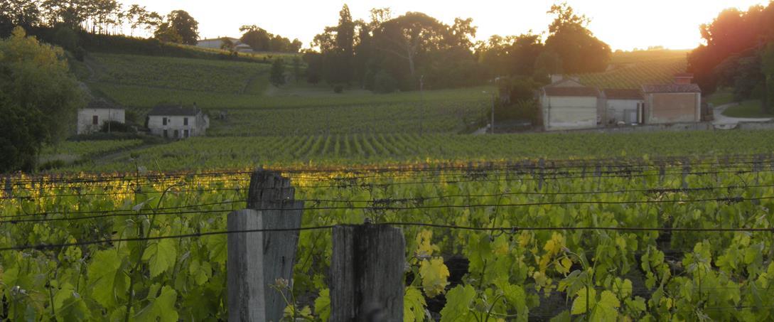 Paysages de vignes classés au Patrimoine Culturel Français?
