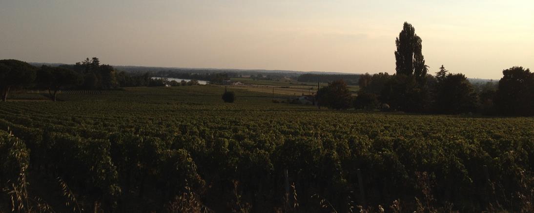 Le vin et la vigne appartiennent au Patrimoine Culturel National