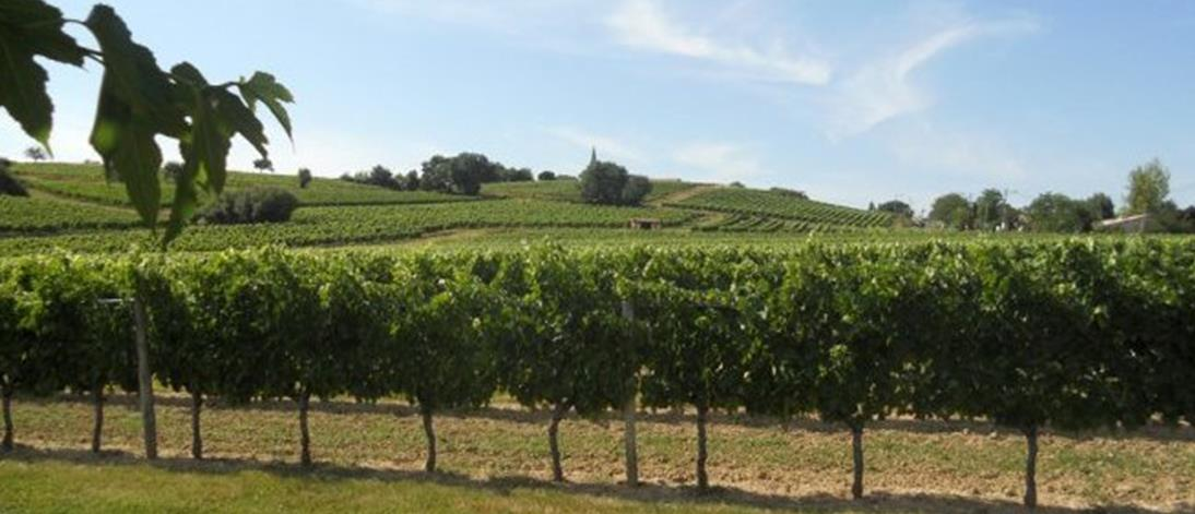 Vignoble de Côtes de Bordeaux St Macaire