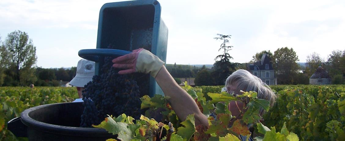 Vendanges Château du pavillon-Copyright Nadine COURAUD