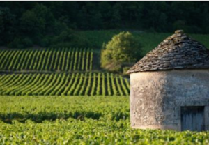 Classement des Climats de Bourgogne au Patrimoine Mondial de l'Humanité