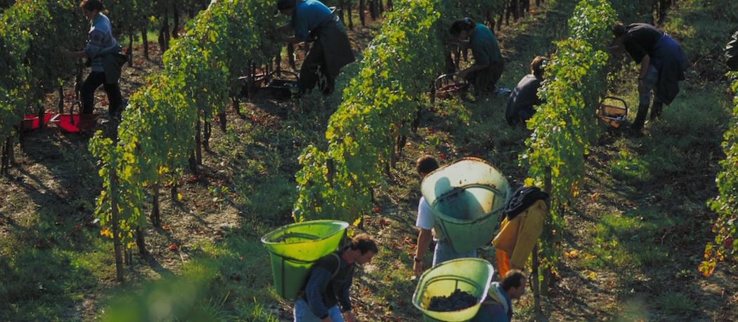 Les vendanges et Jazz and Wine au Château Carbonnieux
