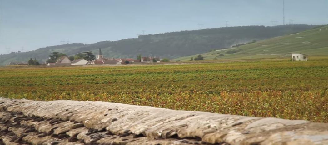 Vendanges 2015 en Bourgogne