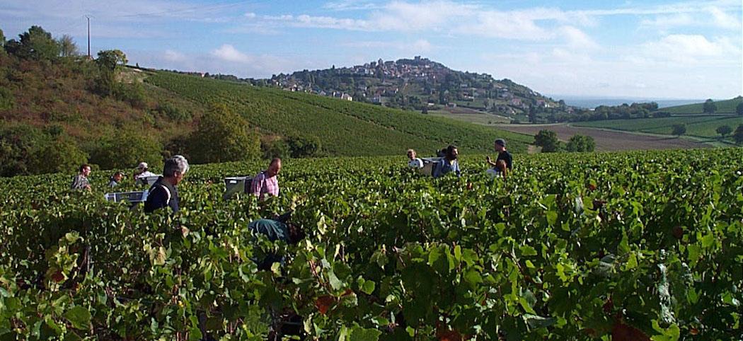 sancerre-Vins Centre Loire