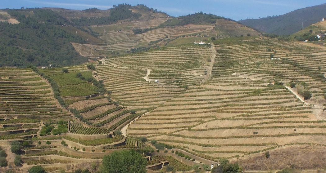 Vignes en terrasses du Douro