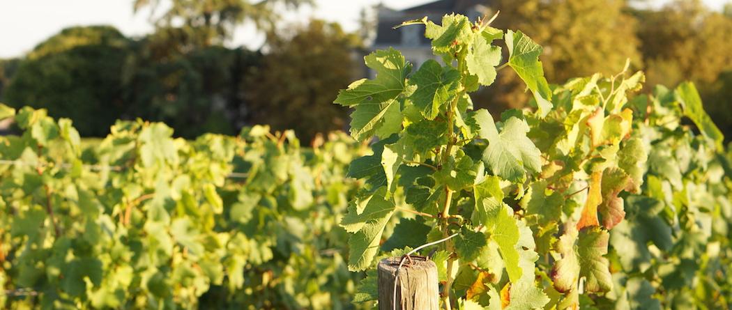 Viticulture et COP 21