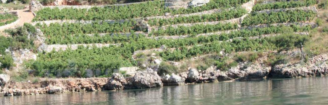 Les vins de Croatie au Challenge du Vin