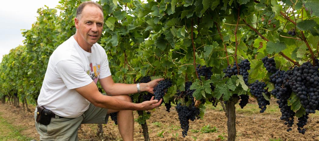 Ste Foy Bordeaux intègre l'Union des Côtes de Bordeaux