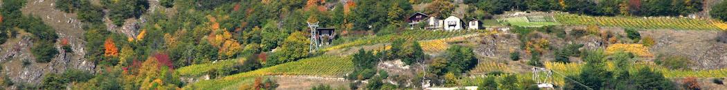 Les vignes dans le ciel au Domaine de Beudon