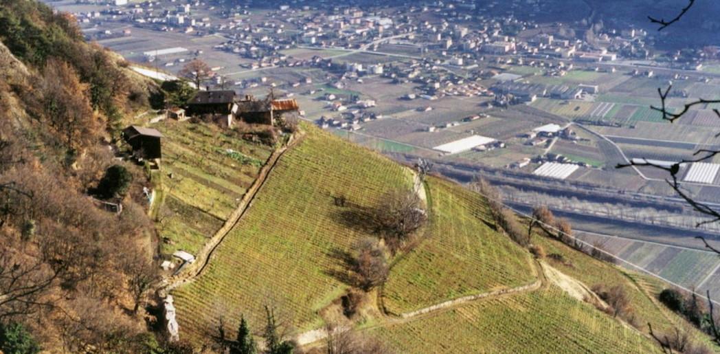 Beudon, les vignes dans le ciel