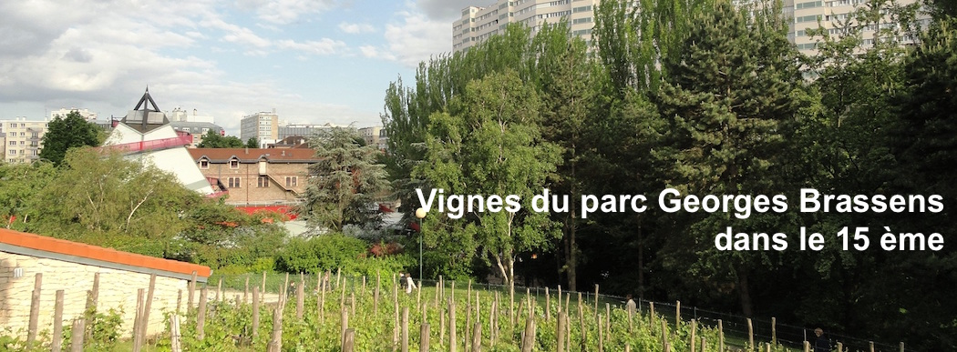 vendanges à Paris