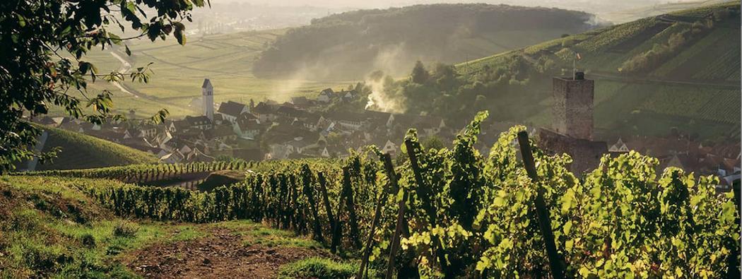 livevendanges : Focus sur les vendanges en Alsace