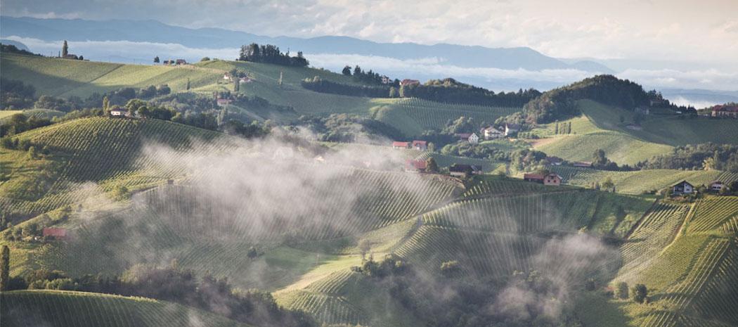 Vinexpo Explorer : découvrir les régions viticoles