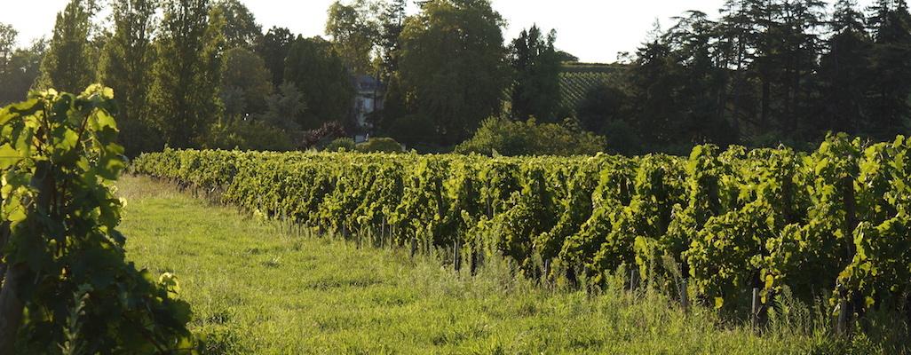 vignes et distances de traitement