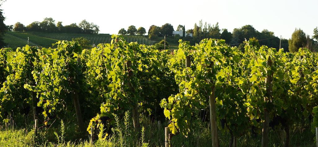 Les riverains et le traitement des vignes