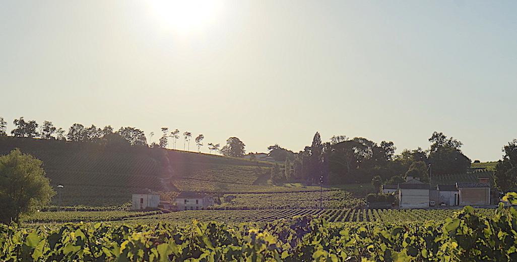 Covid-19 et aides au secteur-vin